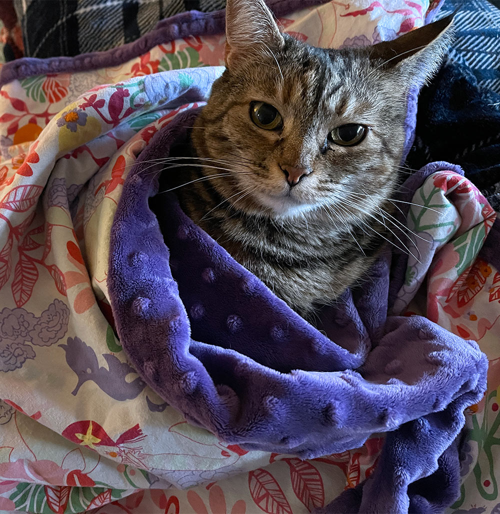 rosie in a blanket