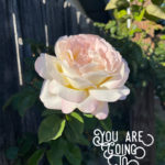 perfect-rose-you are going to make it