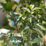 5 things loving lately meyer lemon tree