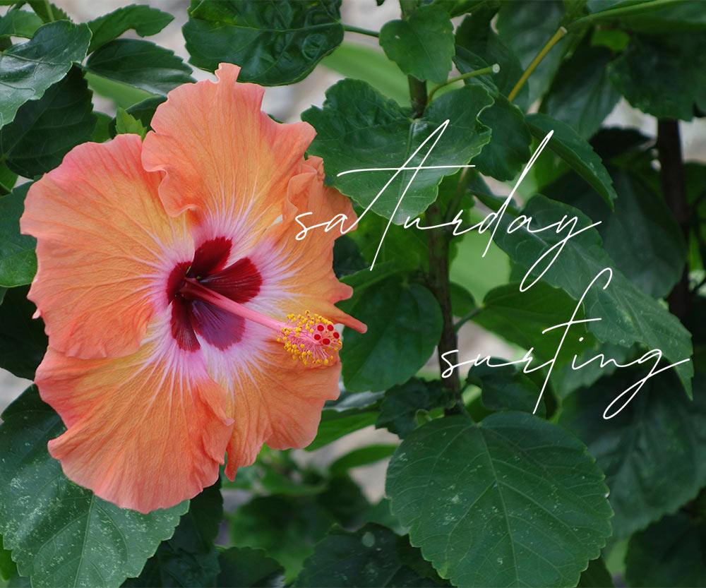 orange and red hibiscus saturday surfing june 26 2021